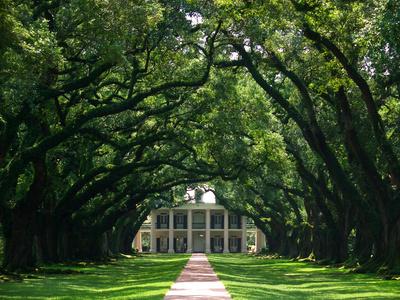Eine Eichen-Allee in Louisiana